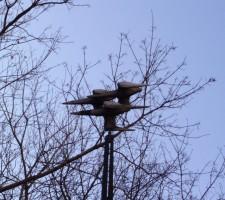 Vtáci